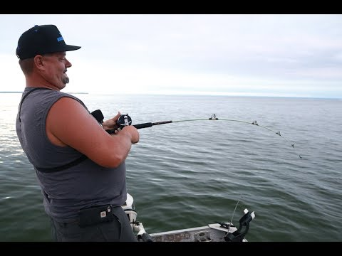 Shark week on the Long Island Sound