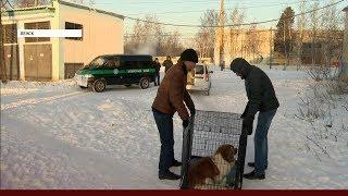 Администрация Ленска возобновила отлов бродячих собак