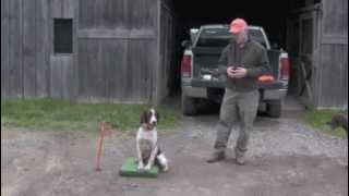 Upland Bird Guide: Part 2: Flushing Dogs