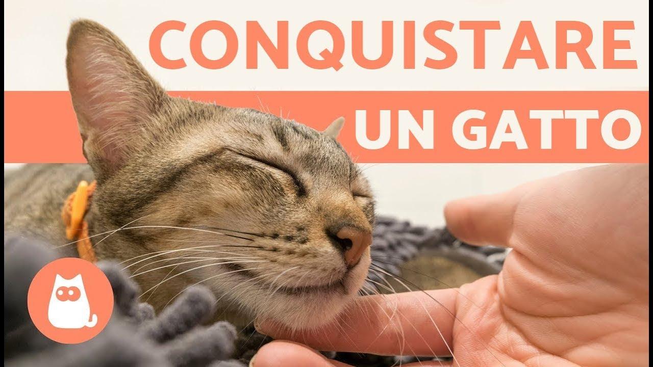 Come riconoscere la razza del tuo gatto? - Immagini e ...