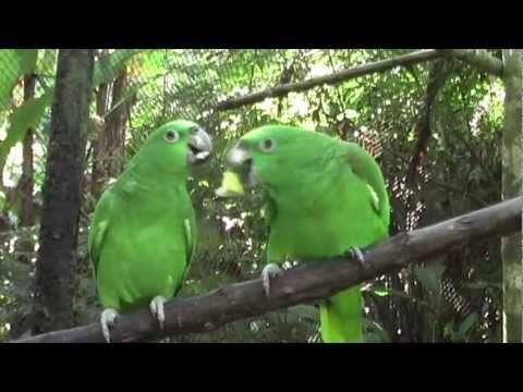 Taricaya Animal Feeding