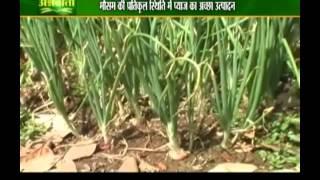 जानिए प्याज की सफल खेती और किसान का अनुभव
