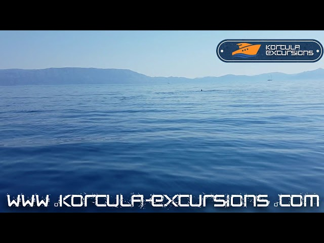 Dolphins From Distance   Korcula Excursions   Korcula Boat Tours