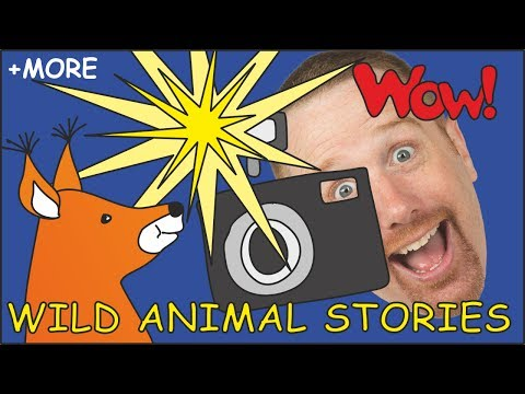 Wild Animal Stories for Kids  Magic Animals from Steve and Maggie  Story for Kids  Wow English TV