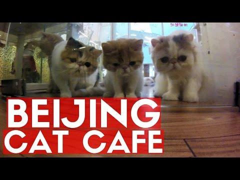 BEIJING CAT CAFE
