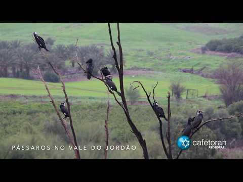 Pássaros no Vale do Jordão - Notícias de Israel direto de Sião