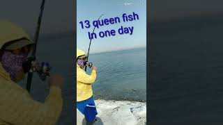 July 6.2019..saudi arabia...13 queen fish in one day.. Giant queen fish....