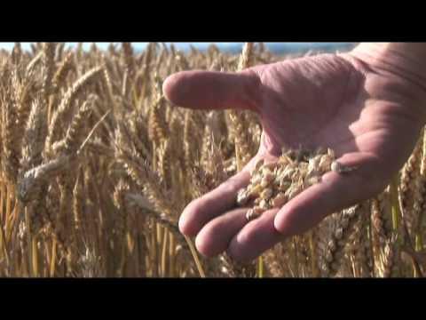 Renewable Fuel Association: Food VS Fuel