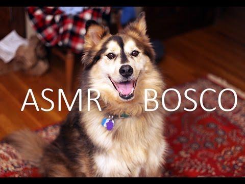 ASMR (Whispers) Meet Bosco the Dog!