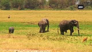 Trump halts decision on elephant trophy imports after uproar
