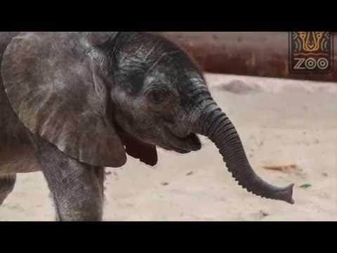 dallas-zoo's-new-baby-elephant-name-unveiled
