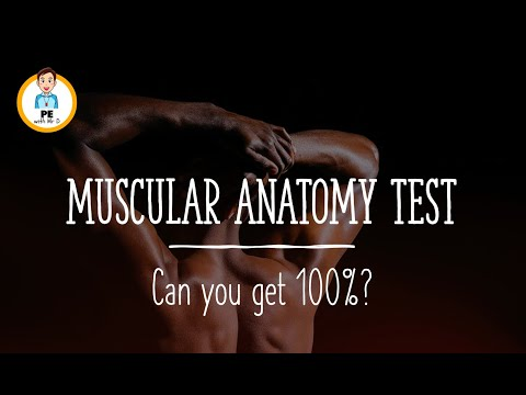 ANATOMY QUIZ - Muscles of the body! Can you get 100%?