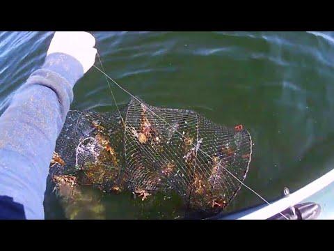 Ловля раков весной на раколовки ятерь! 10 дней стояли проверяем улов!