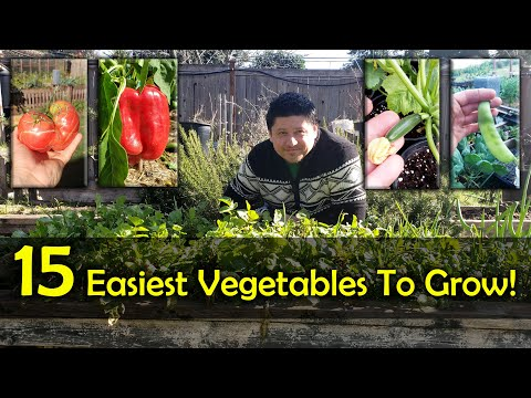 The 15 Easiest Vegetables To Grow For Beginners