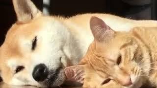 Любовь собаки и кошки