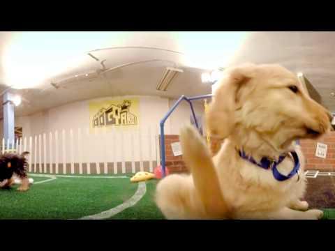 #AllForSmallBiz 360: The Dog Yard LA | Google