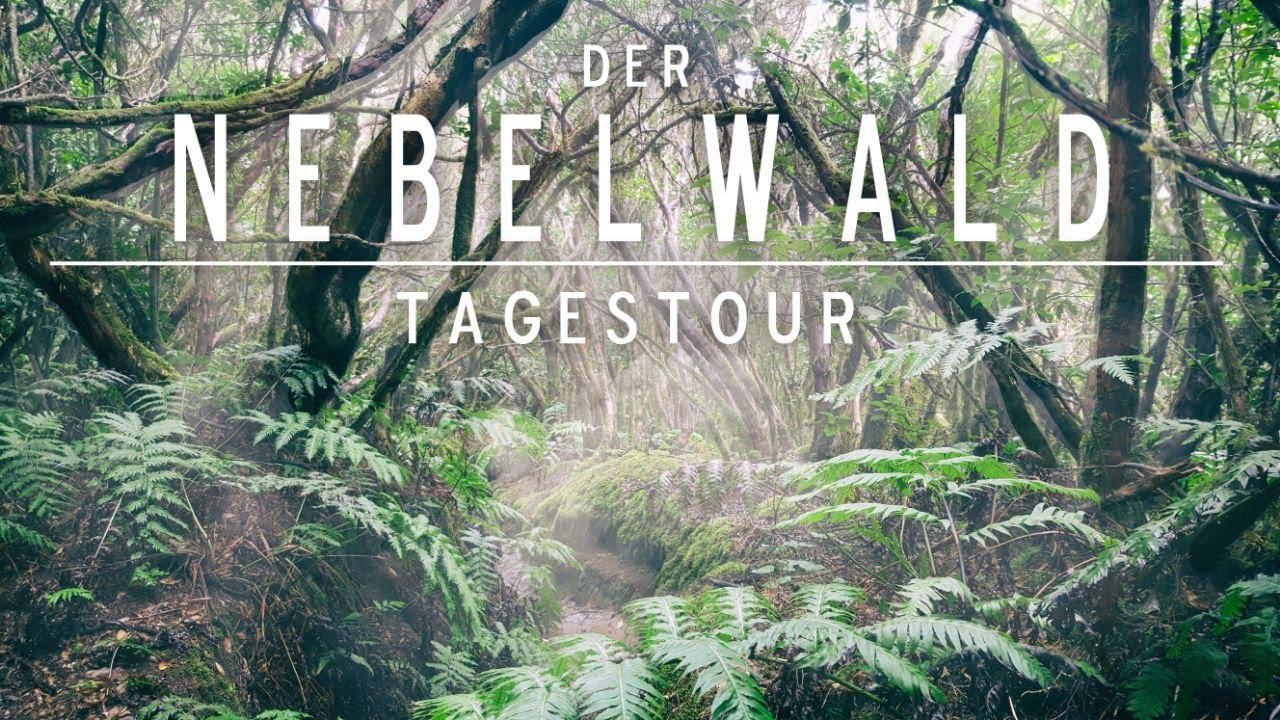 tour  der nebelwald auf teneriffa  urwald erlebnis in