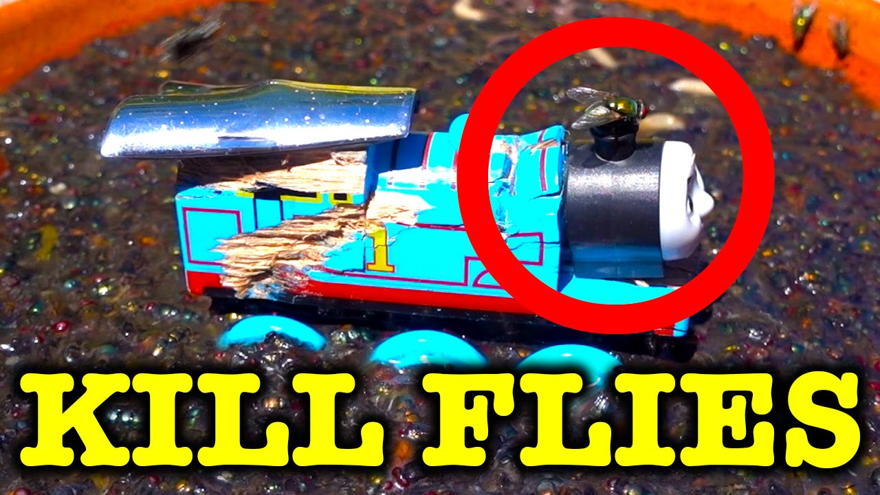 How To Kill Flies With Flies (Warning Gross Video May Induce ...