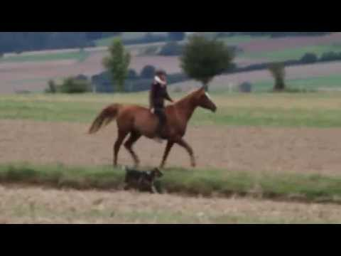 Nihal tackless & bareback galopping in an open field