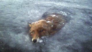 22 Шокирующих Животных Замерших Во Льду cмотреть видео онлайн бесплатно в высоком качестве - HDVIDEO