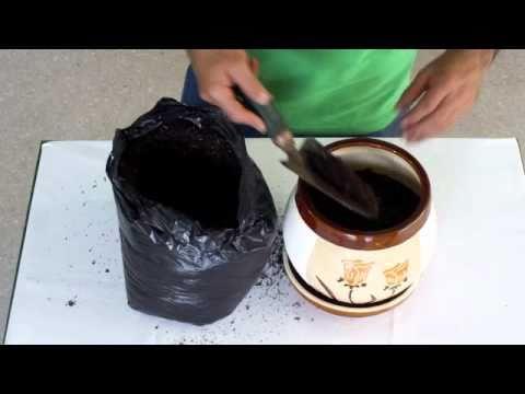 Como sembrar una planta peque a youtube for Pasos para sembrar una planta