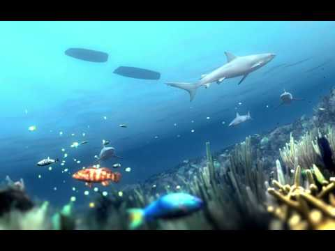 Coral Reefs Depend on Sharks
