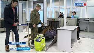 И деньги пахнут: новосибирская таможня учит собак искать доллары и евро