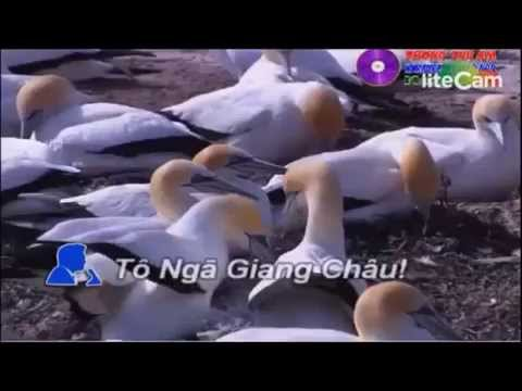 TÂM SU LOAI CHIM BIEN- karaoke- R .P.-SCA