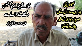 Simple Diary Farm in Pakistan   Cows And Buffaloes Farming   Buffaloes Farming   Farming Tips