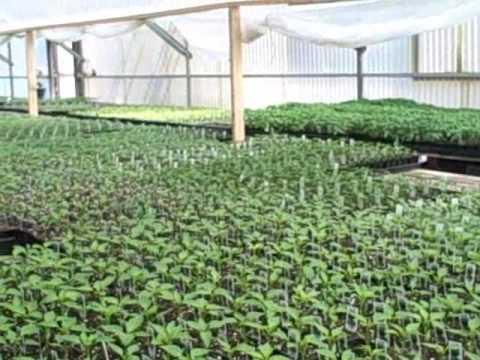 A Visit To Imwalle Gardens Nursery Farm Stand In Santa Rosa California