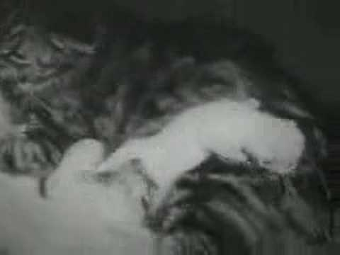The Private Life of a Cat  II- Alexander Hammid & Maya Deren