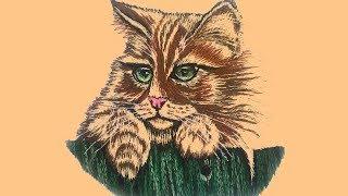 Вышивка гладью.  Портрет кошки