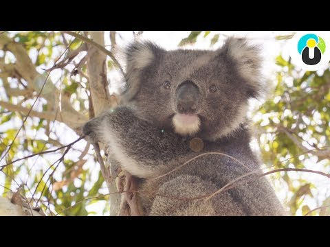 AUSTRALIEN Roadtrip - MUST-SEES In Victoria 🐨🌿 | Guru On Tour