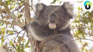 Melbourne & Victoria: Ein unvergesslicher Roadtrip durch Australien | Guru on Tour