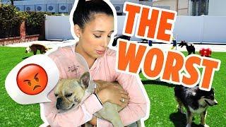 YELP'S 5 STAR REVIEWS ARE LIES! - THE WAGS CLUB HURT MY DOG 😭| Mar
