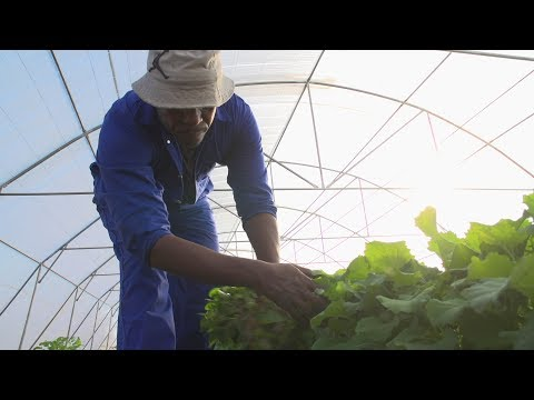 A Day in the Life of a Vegetable Farmer in Lesotho