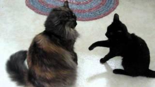 Freyja and Autumn James Bond in Feline form