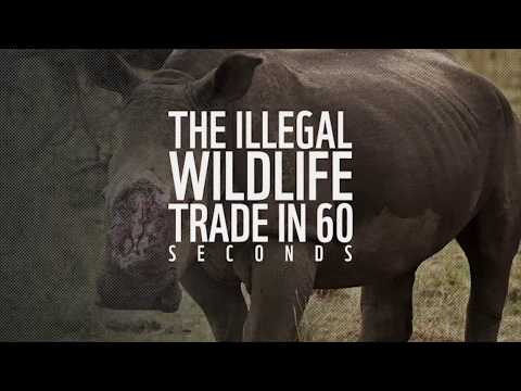 The illegal wildlife trade in 60 seconds