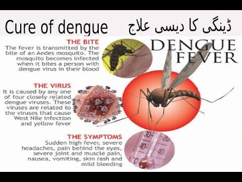 About dengue(dengi fever) ڈینگی کا دیسی علاج