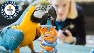 Most rings placed on a target by a parrot - Guinness World Records