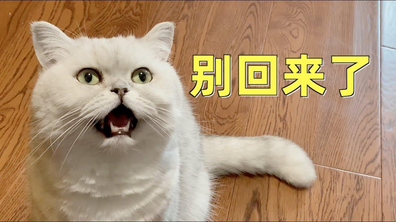主人出差回家没带小鱼干,猫咪见状不认人:没吃的回来干嘛!