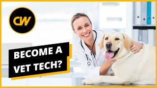 Become a Vet Tech in 2020? Salaries, Jobs , Forecasts