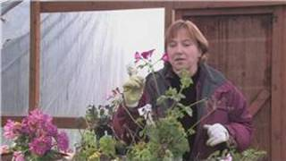Gardening Tips : How to Pinch Back Flowers