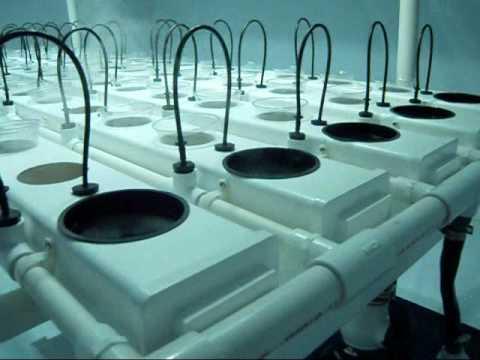 Duecrew 7500 Hydroponic System Fogponics Grow Room