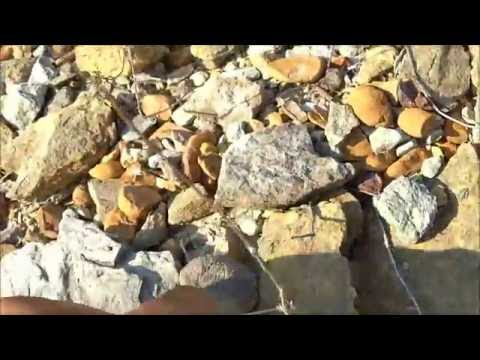 Mineral Wells Fossil Hunting