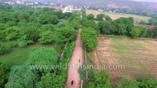 Country roads of Gurgaon - farm houses and farmlands in Haryana