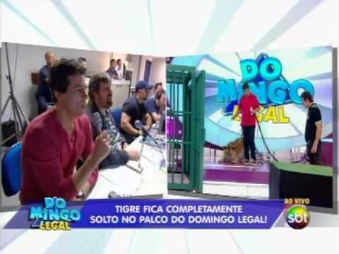 Domingo Legal (1/12/13) - Tigre fica sozinho no palco do Domingo Legal