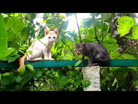 Smart Cats Compilation - CAT COMPILATION - Two Cats Hard fighting # Part 01