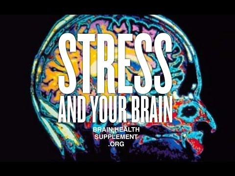 Stress relief and how it affects your Brain