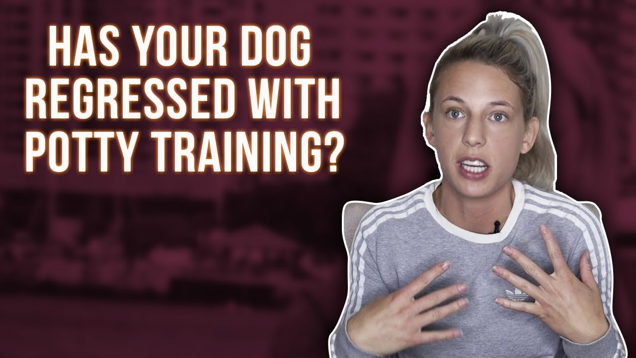 Has Your Dog Regressed With Potty Training Youtube